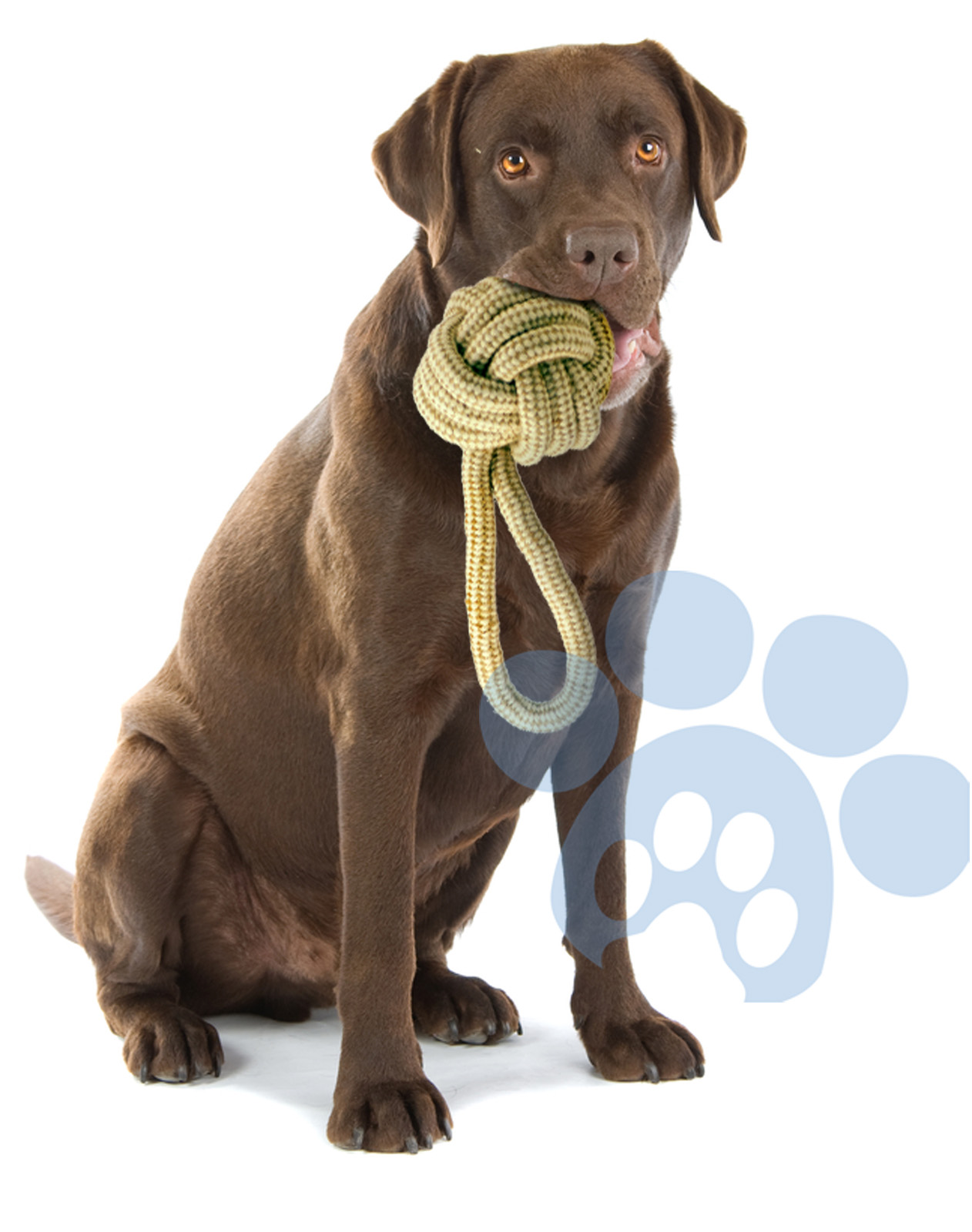 Rope and Jute dog toys – Elite Pet Group Inc